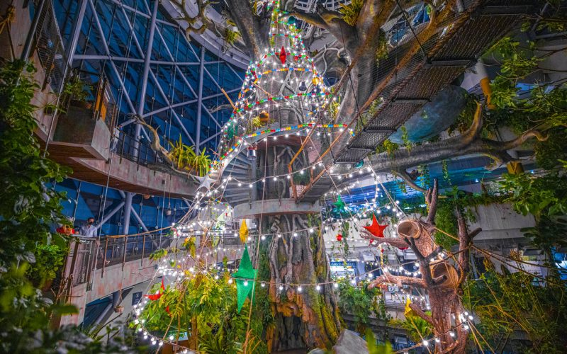 Can This Be The Largest Christmas Tree In The UAE?