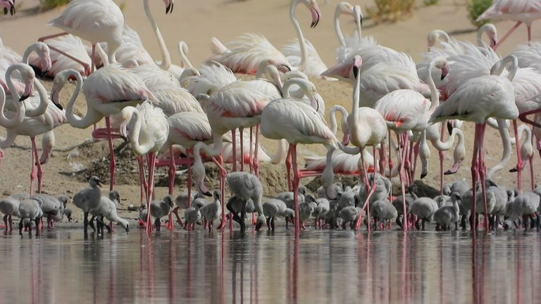 You Can Now Visit The Al Wathba Wetland Reserve